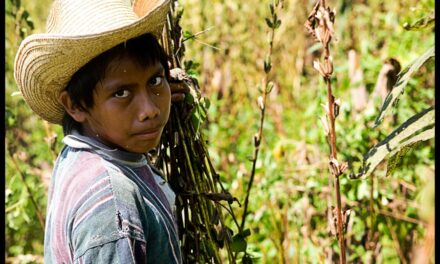Uno de cada 8 niños menores de 5 años en México sufre desnutrición
