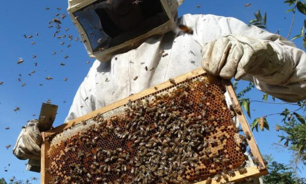 La industria apícola, en grave peligro