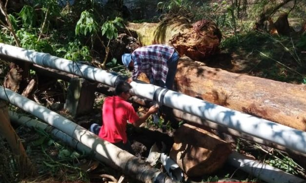 Caída de árboles deja sin agua a habitantes de Chietla