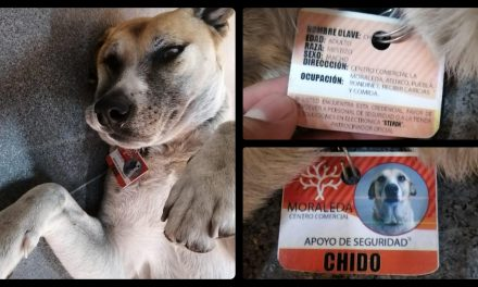 Plaza comercial de Atlixco contrata a perrito como guardia de seguridad