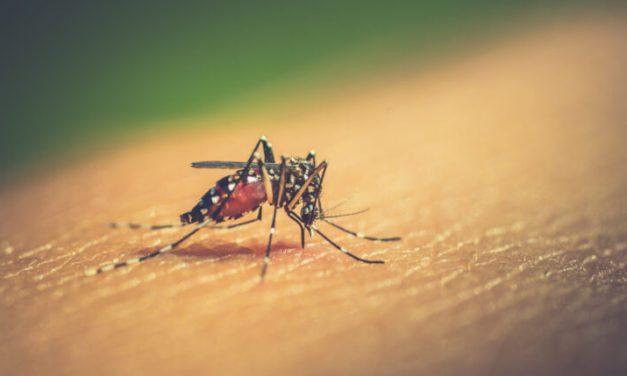 Aumentan los casos de dengue en la entidad poblana
