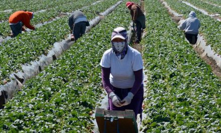 Canadá empezó a vacunar a trabajadores agrícolas mexicanos