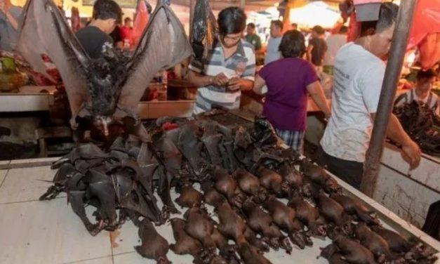 OMS pide detener la venta de animales silvestres